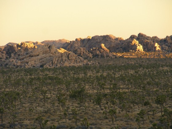 A view in Joshua Tree. Photo: David E Anderson